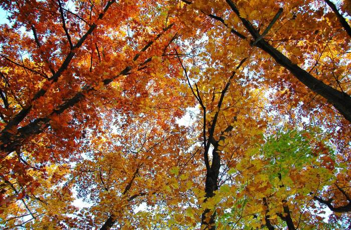 Деревья, осень, природа, листва, небо, autumn