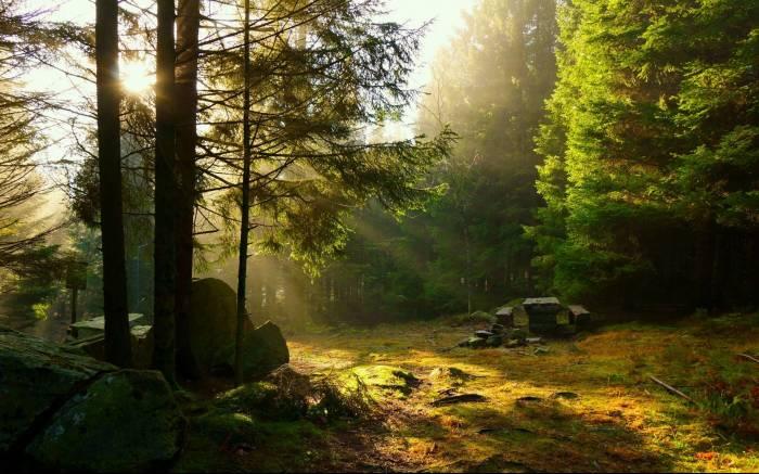 Лес, деревья, лучи, лавочка, пейзаж, природа