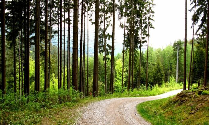 Лес, небо, травы, деревья, дорога, природа, forest