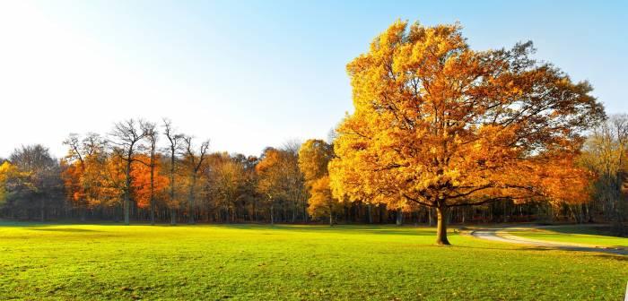 Природа, пейзаж, лес, осень, nature, landscape
