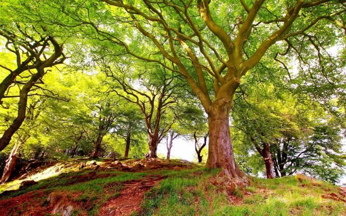 Природа, пейзаж, деревья, лес, wood, nature