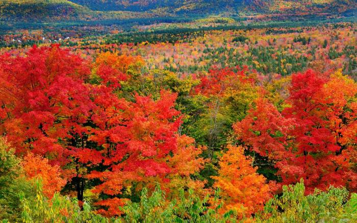 Осень, лес, деревья, природа, Autumn, forest