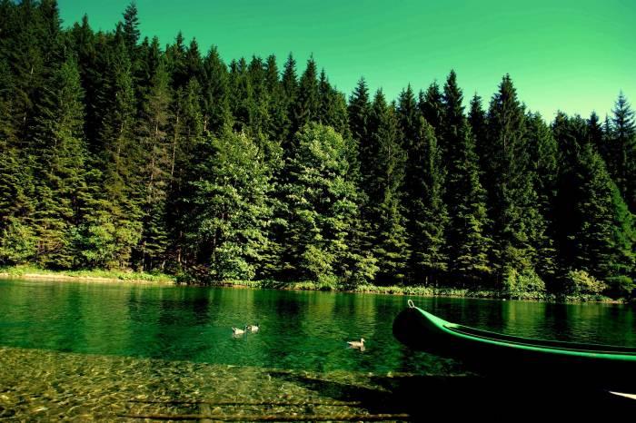Река, природа, лес, лодка, утки, river, nature