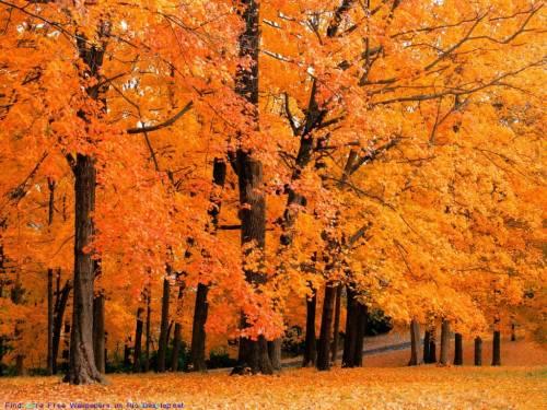Оранжевая листва