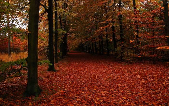 Осень, лес, деревья, пейзаж, листва, autumn