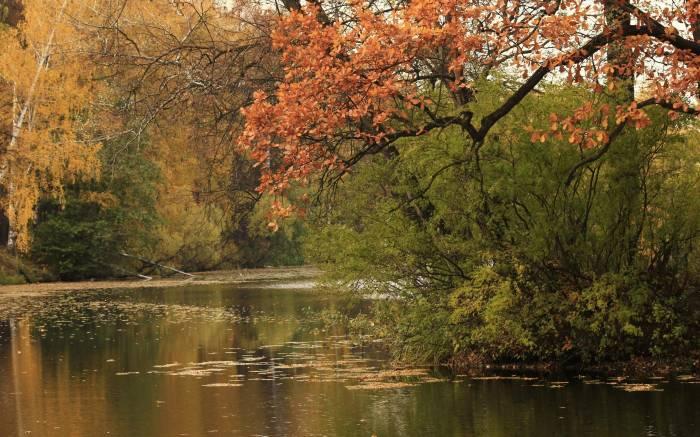 Вода, остров, осень, пруд, природа, лес, forest