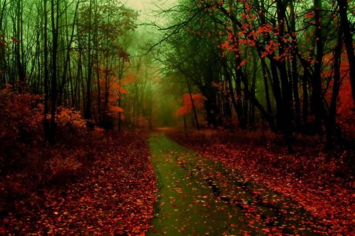 Лес, туман, листья, осень, дорога, forest, fog
