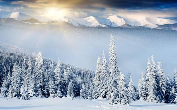 Зима, снег, природа, winter, ёлки