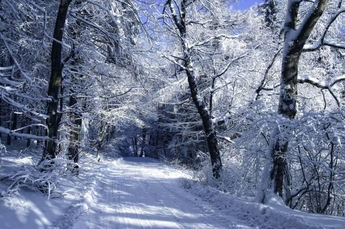 Лес, дорога, снег, зима, деревья, иней, winter