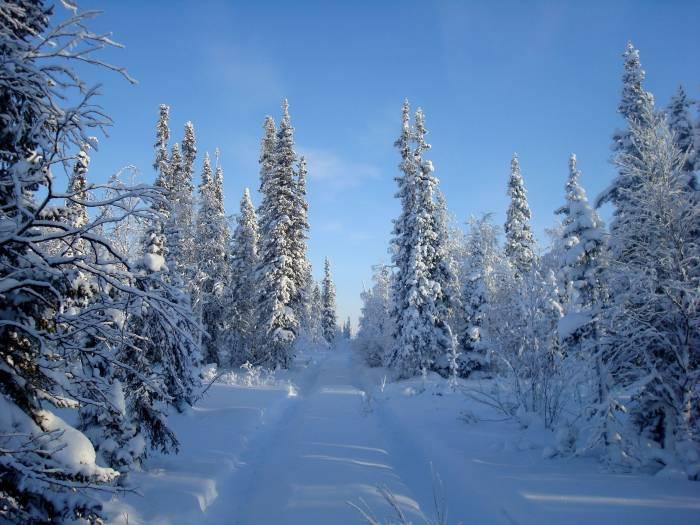 Зима, снег, сугробы, лес, деревья, ели, елки, хвой