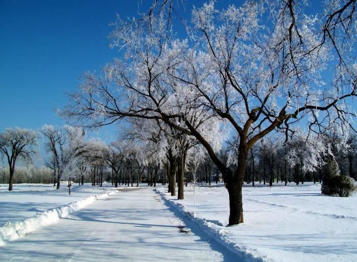 Зима, дорога, деревья, пейзаж, снег, winter, road