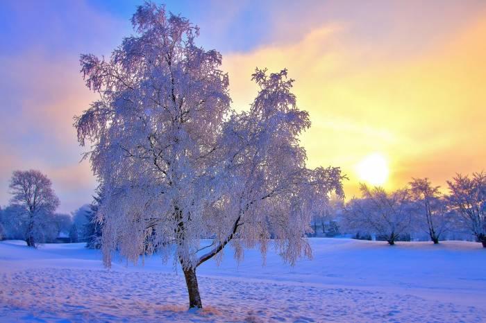 Снег, иней, зима, небо, деревья, солнце, winter