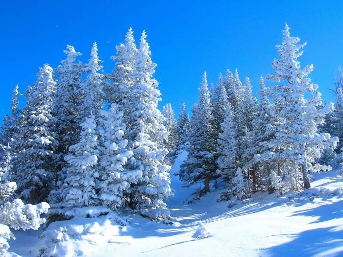 Зима, лес, деревья, пейзаж, природа, снег, winter