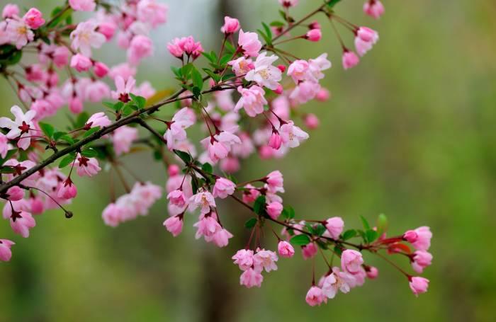 Цветение, ветка, цветы, весна, природа, bloom