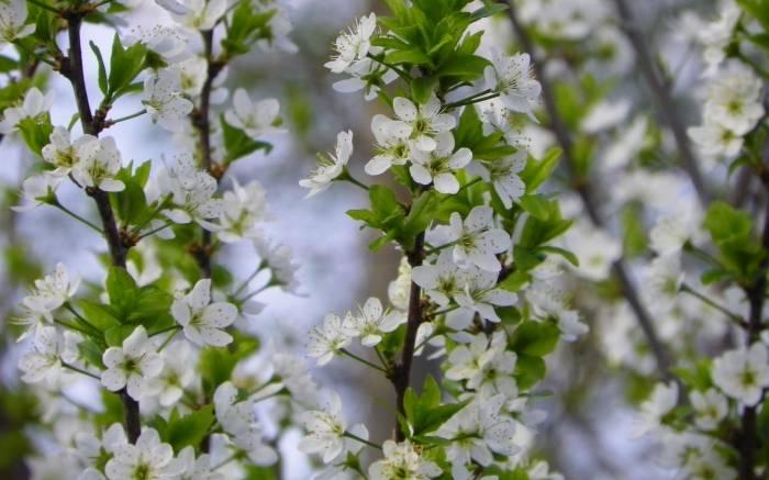 Цветение, весна, природа, листья, bloom, spring