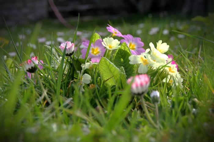 Весна, полевые, трава, цветы, природа, spring