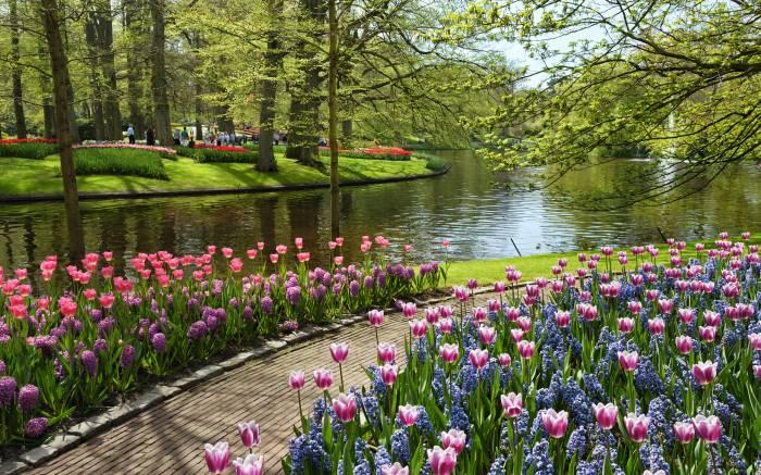 Парк, Netherlands, Нидерланды, Keukenhof, цветы