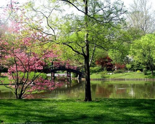 Цветение деревьев, весна