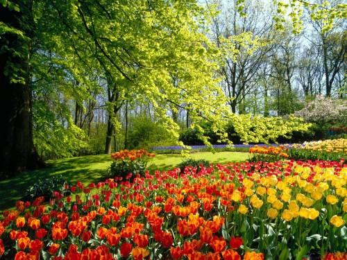 Весна, лес, тюльпаны