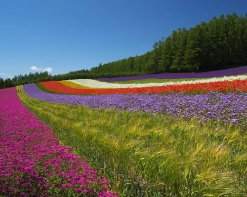 Луг луговые цветы цветы природа