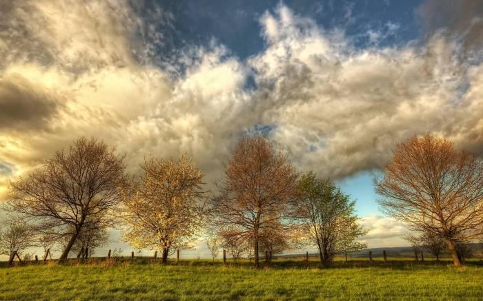 Природа, небо, деревья, облака, весна, spring