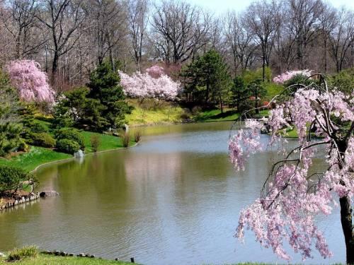 Весна, цветение деревьев