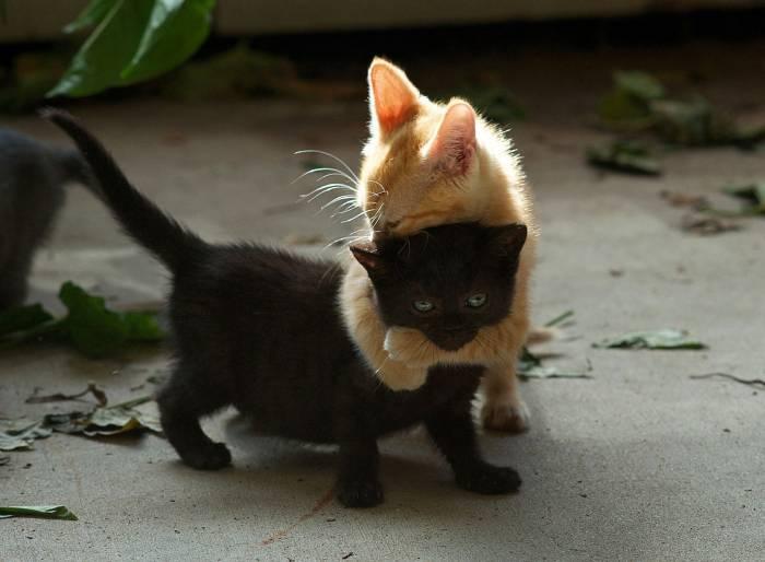Котята, двое, черный, рыжий, игра, животные