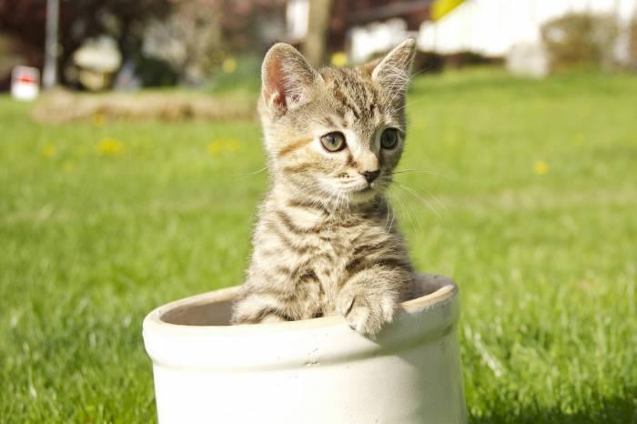 Котёнок, серый, полосатый, лужайка, kitten, cat