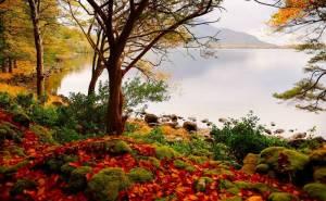 Осень, озеро, деревья, пейзаж, природа, autumn
