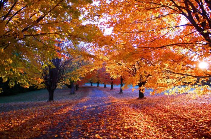 Осень, дорога, деревья, пейзаж, природа, листья