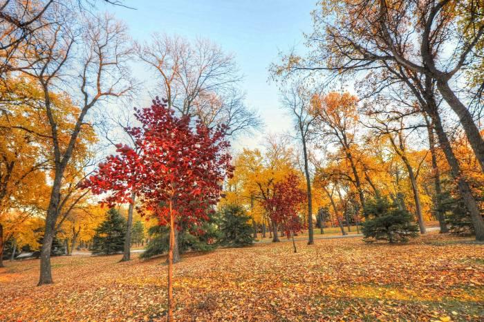 Осень, деревья, парк, пейзаж, листва, autumn, tree