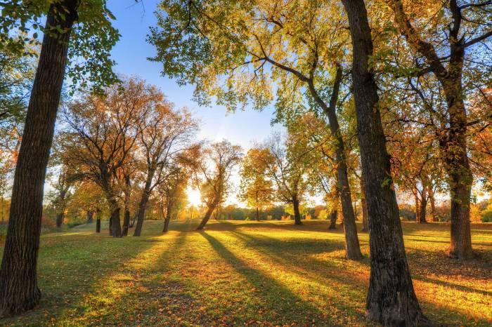 Пейзаж, парк, листва, деревья, осень, park
