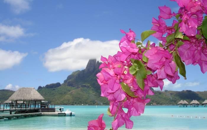 Природа, курорт, sea, море, бунгало, цветы