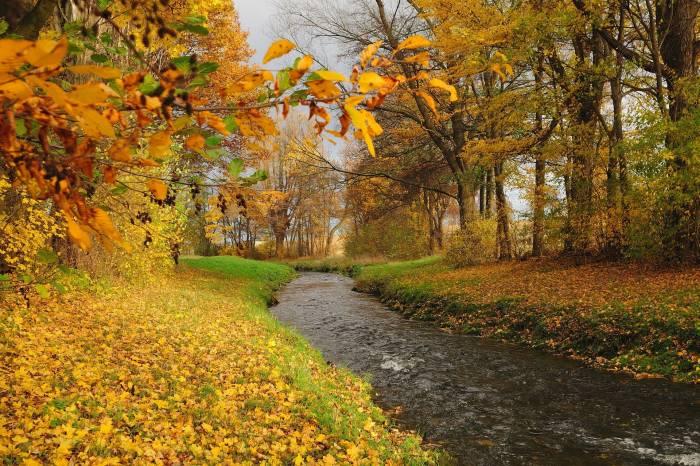 Осень, река, лес, деревья, пейзаж, autumn, river