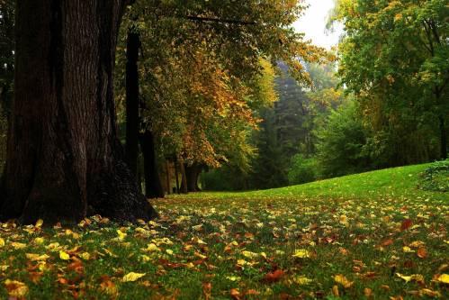 Природа, осень, nature, autumn, park, tree, forest