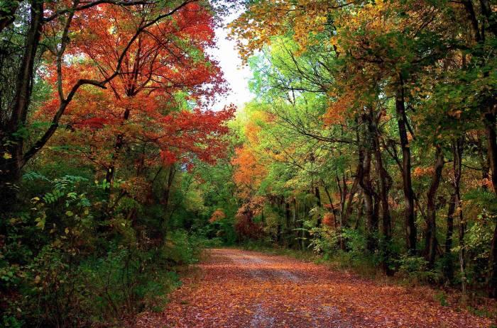 Осень, лес, дорога, деревья, пейзаж, autumn