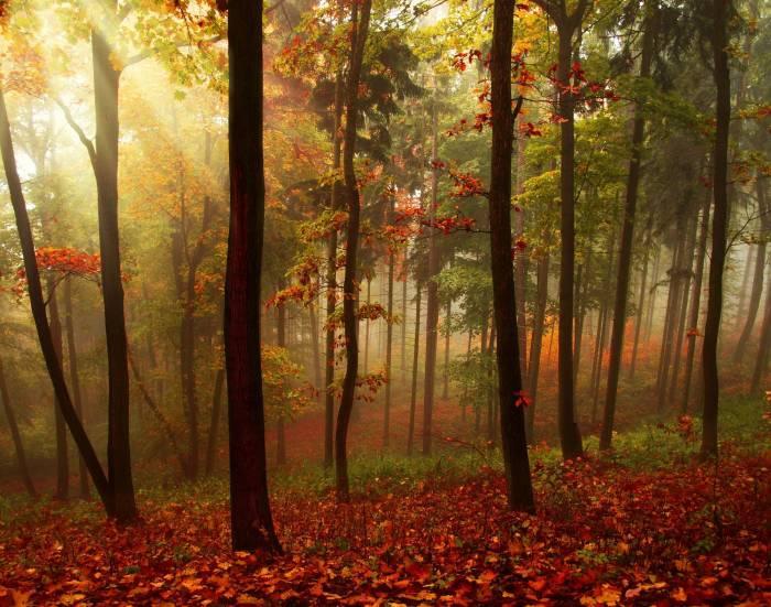 Осень, лес, деревья, лучи, туман, природа, пейзаж