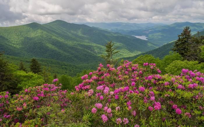 Горы, озеро, вид с верху, цветы, пейзаж, mountains