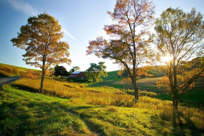 Дорога, дерево, осень, небо, домик, tree, autumn