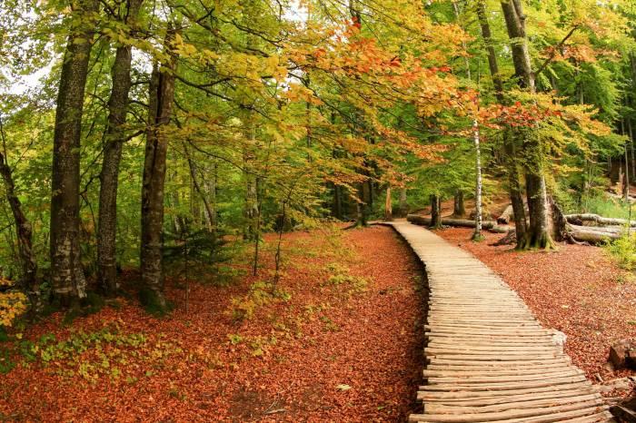 Лес, деревья, осень, деревянный настил, природа