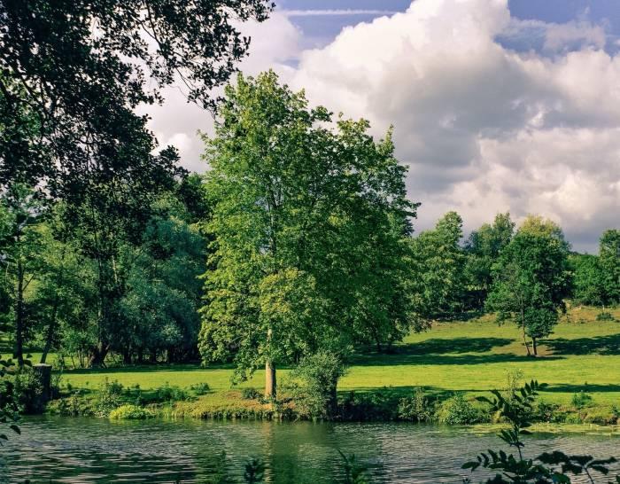 Река, деревья, небо, природа, пейзаж, landscape