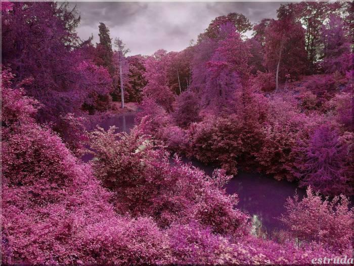 Природа, пейзаж, деревья, небо, речка, nature