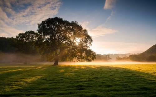 Обои природа, дерево, туман, трава