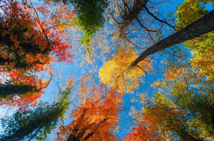 Небо, деревья, голубое, природа, листья, осень