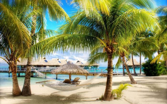 Пальмы, песок, гамак, природа, пейзаж, море