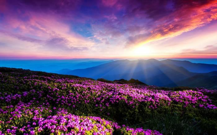 Горы, небо, лучи, цветы, облака, закат, mountains