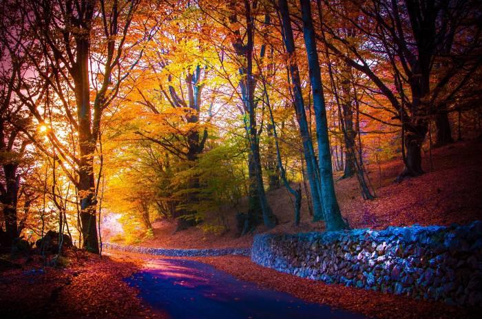 Осень, дорога, деревья, пейзаж, природа, листва