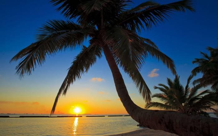 Закат, море, пальмы, пляж, берег, песок, вечер