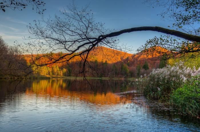 Река, горы, деревья, пейзаж, природа, river, trees
