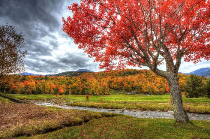 Осень, речка, деревья, поле, пейзаж, autumn, river